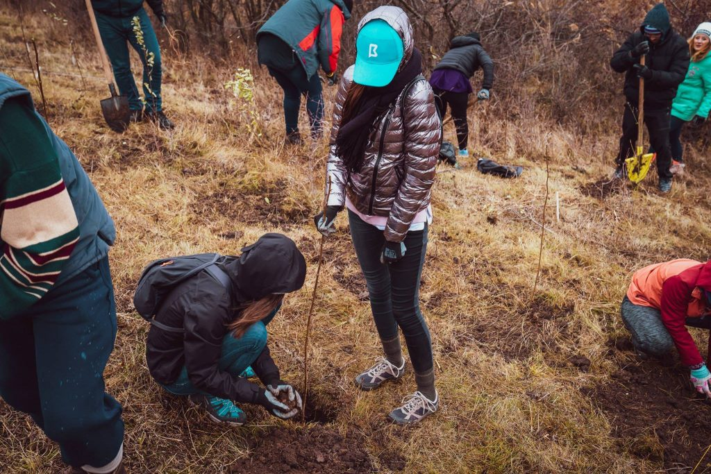 3000 Trees Planted within The BRAND MINDS Forest Project