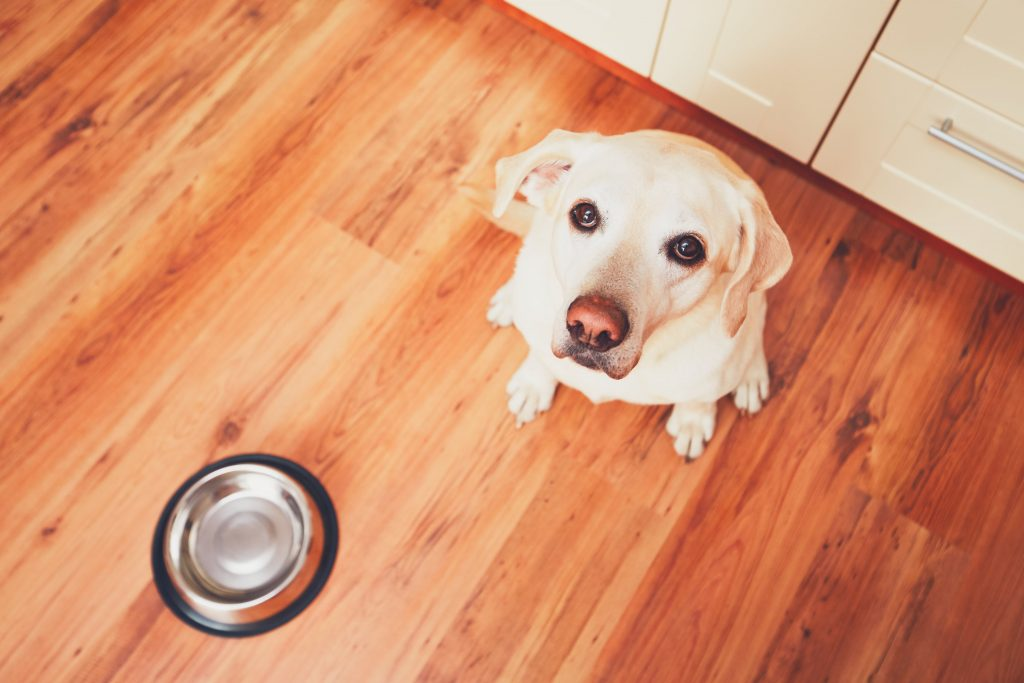 Innovation in the pet food industry - E-commerce for dogs