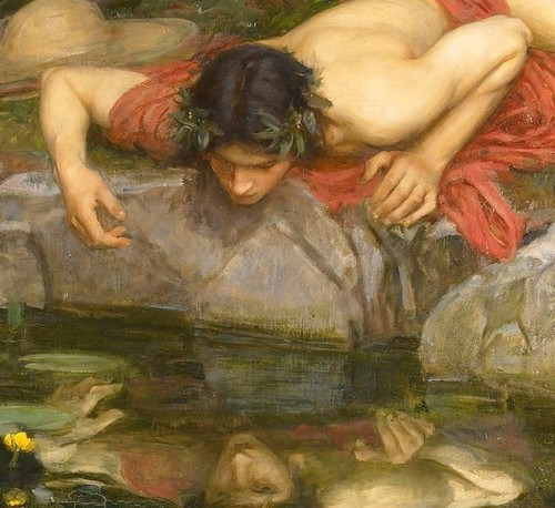 narcissus-detail